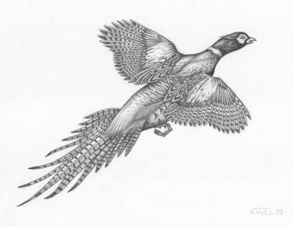 Pheasant, Medieval and...